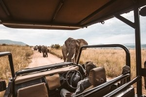 Tourists spotting elephants on safari before the pandemic hit. Photo by redcharlie on Unsplash